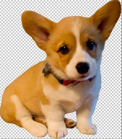 tranparent_dog