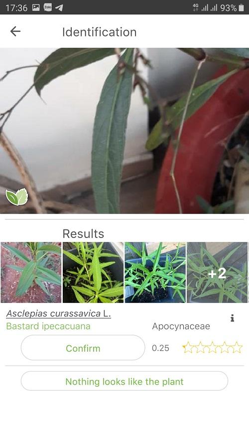 Screenshot_20200203-173615_PlantNet