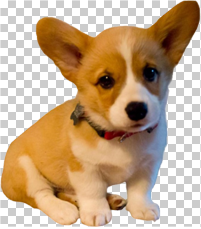 dog_thumb